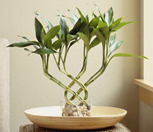 200508489-001  گیاهانی که انرژی مثبت را به خانه تان می آورند 200508489 001 crop 300x259