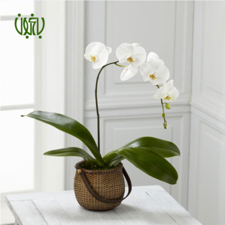 گل و گیاه خانگی گل و گیاه خانگی Orkideh 5 450x450 گل و گیاه خانگی گل و گیاه خانگی Orkideh 5 450x450