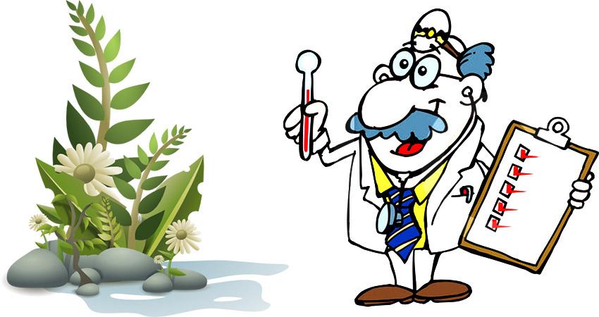 بيماريهاي مهم گياهان آپارتماني PlantDesease 1  وبلاگ PlantDesease 1
