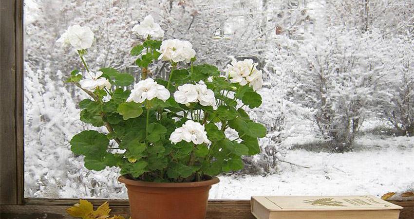 همه نکته هایی که باید درباره گل ها در زمستان بدانید WinterCare  وبلاگ WinterCare
