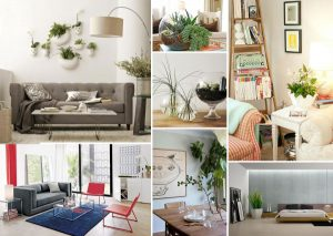 house-plants-decorations-600x425