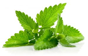 mint-leaves  گیاهانی که انرژی مثبت را به خانه تان می آورند mint leaves 300x193