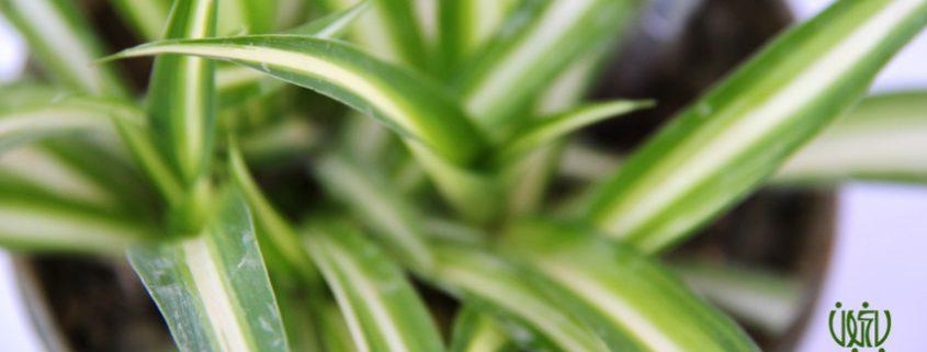 تأثير گل و گياه روي حالت روحي افراد taasiir weblog 845x321