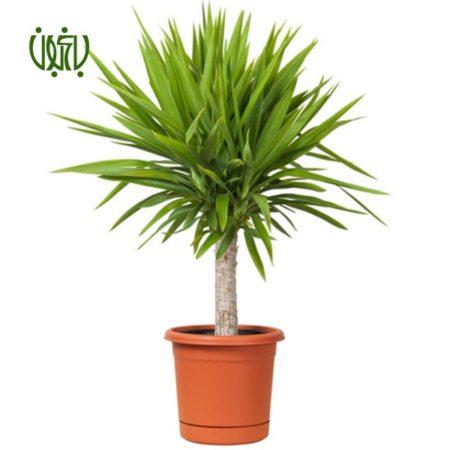 گل و گیاه خانگی گل و گیاه خانگی yoka 4 450x450 گل و گیاه خانگی گل و گیاه خانگی yoka 4 450x450