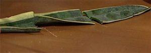 تكثير  گیاه سانسوريا ابلق با روش قلمه برگ hhs289 300x105