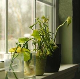 معرفی رایجترین مشکلات گیاهان آپارتمانی 4