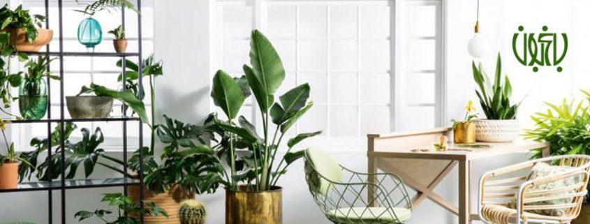 گیاهان آپارتمانی  نکاتی کلیدی در نگهداری گل و گیاه در خانه flower plant banner 845x321