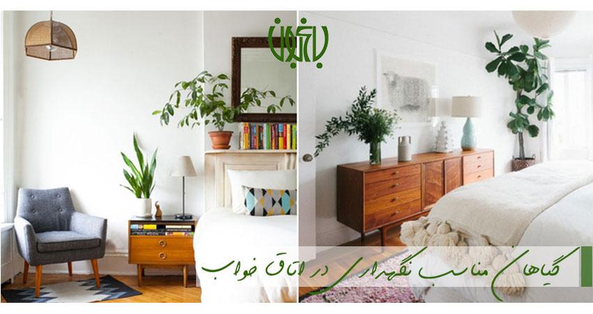 گیاهان مناسب اتاق خواب  گیاهان مناسب نگهداری در اتاق خواب indoor plant for bedroom  وبلاگ indoor plant for bedroom