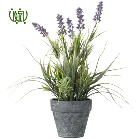 اسطوخودوس  اسطوخودوس-OFFICIAL LAVENDER OFFICIAL LAVENDER 3 450x450