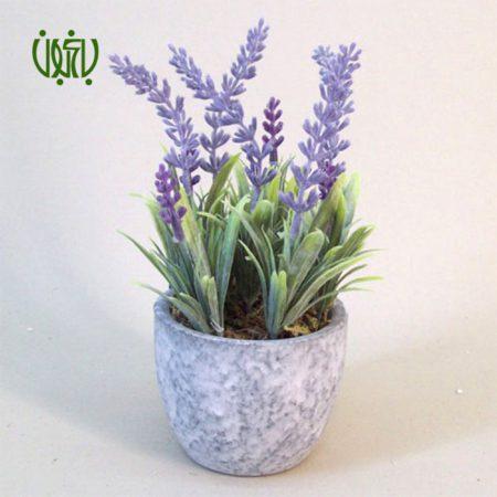 اسطوخودوس گل و گیاه خانگی گل و گیاه خانگی Plant OFFICIAL LAVENDER 05 450x450 گل و گیاه خانگی گل و گیاه خانگی Plant OFFICIAL LAVENDER 05 450x450