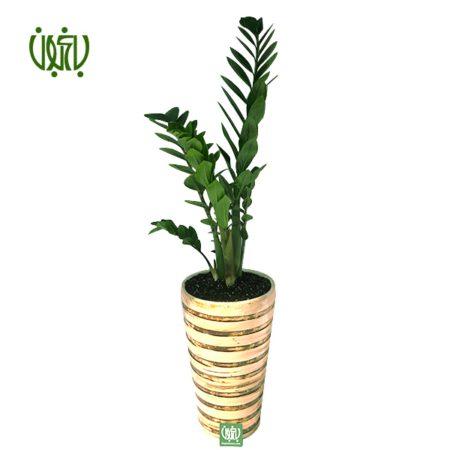 زاموفیلیا  زاموفیلیا با گلدان سفالی plant zamioculcas zamiifolia offer 1 450x450