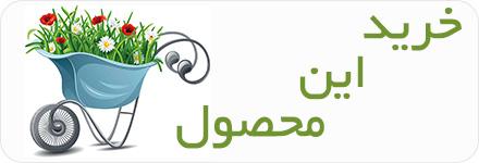 حسن یوسف - Coleus Blumei حسن یوسف حسن یوسف – Coleus shop plant