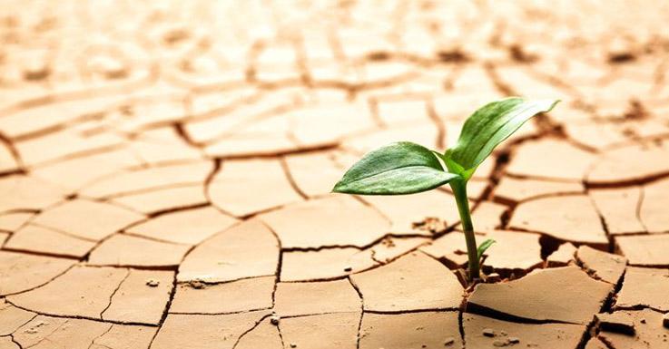 چگونه محصولاتی تولید کنیم که بدون آب دوام آورند؟ Drought  وبلاگ Drought