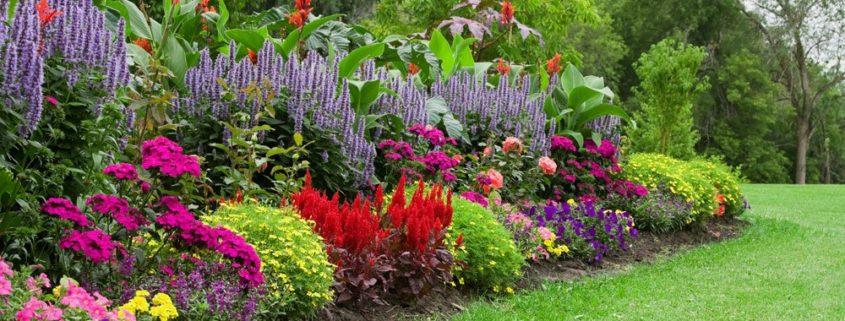 گل آذین و انواع آن در علم گیاه شناسی organic flower garden budget main 1000 845x321