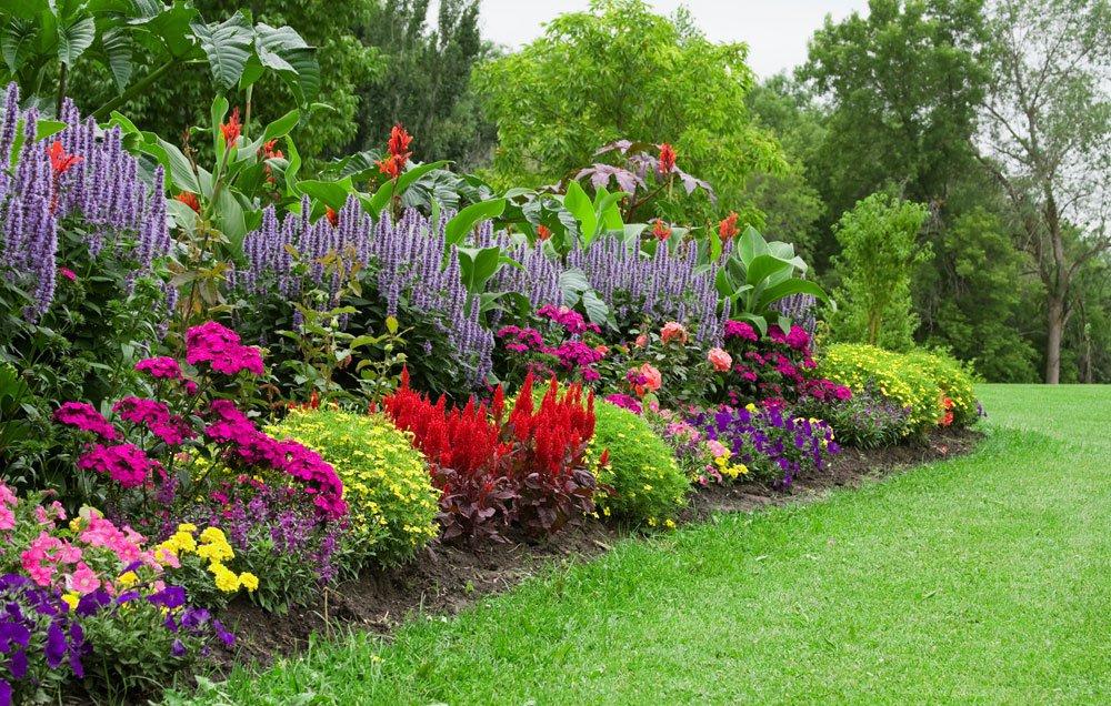 گل آذین و انواع آن در علم گیاه شناسی organic flower garden budget main 1000  وبلاگ organic flower garden budget main 1000
