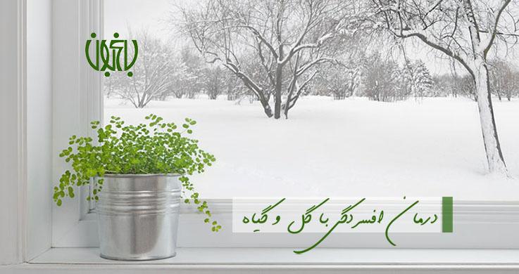 مراقبت از گیاهان آپارتمانی در فصل سرما winter 2  وبلاگ winter 2