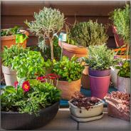 گیاهان فضای باز  فروشگاه OutdoorPlants 1