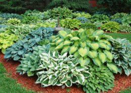 طبقه بندی گیاهان زینتی Outdoor Plants  260x185  خانه Outdoor Plants  260x185