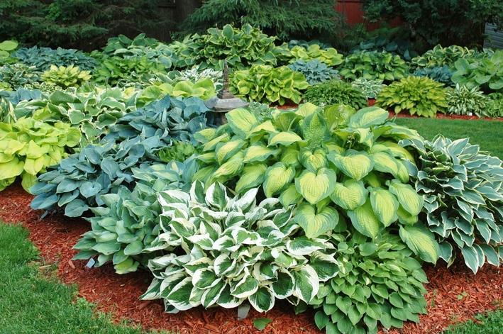 طبقه بندی گیاهان زینتی Outdoor Plants  وبلاگ Outdoor Plants