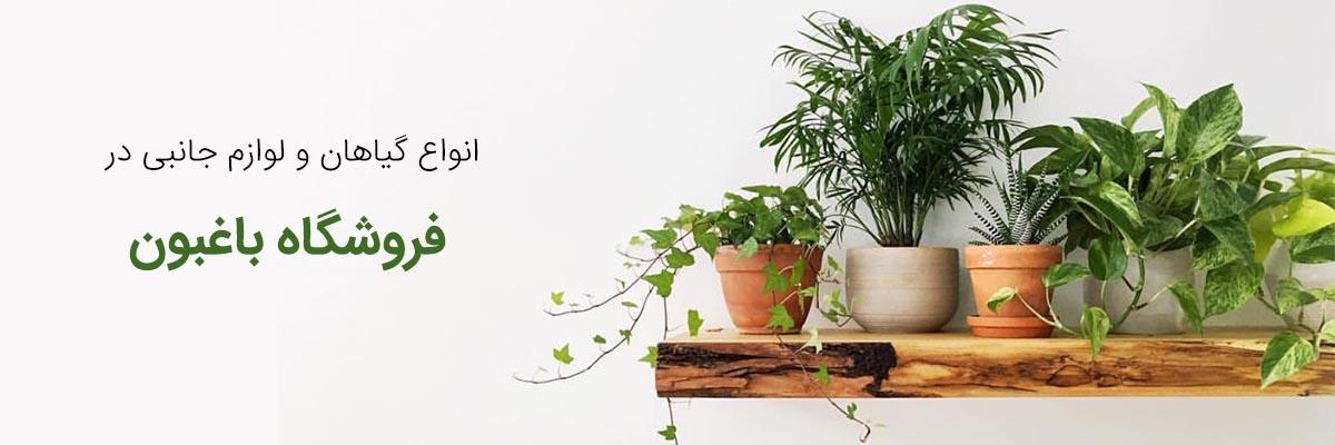 فروشگاه گیاهان آپارتمانی گل و گیاه خانگی گل و گیاه خانگی froshgah