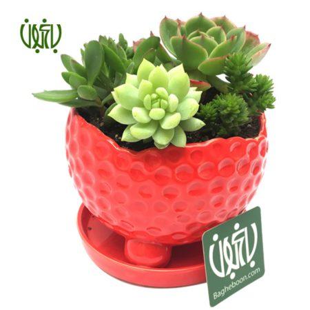 دیش گاردن  مجموعه ساکولنت در گلدان پایه دار gift plant yalda sp1 6 450x450