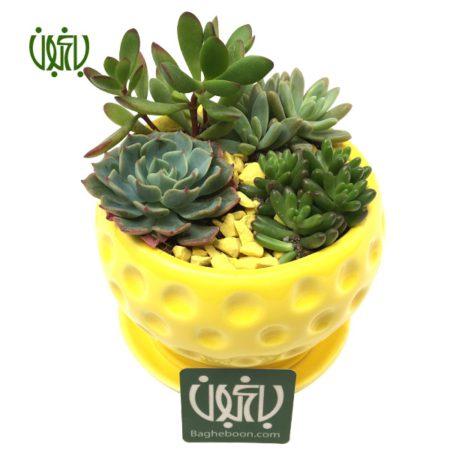 دیش گاردن  مجموعه ساکولنت در گلدان پایه دار gift plant yalda sp8 3 450x450