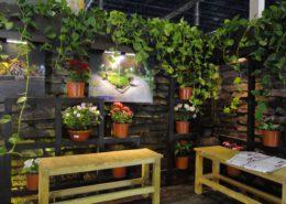 نحوه تکثیر گیاه فیکوس الاستیکا 115408 514 3 260x185  خانه 115408 514 3 260x185