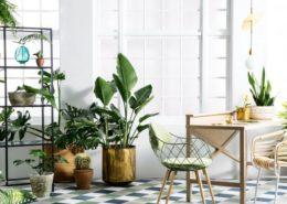پرورش گیاهان زینتی در خانه پرورش گیاهان زینتی در خانه indoor plants 260x185 گل و گیاه خانگی گل و گیاه خانگی indoor plants 260x185