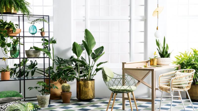 پرورش گیاهان زینتی در خانه پرورش گیاهان زینتی در خانه indoor plants  وبلاگ indoor plants