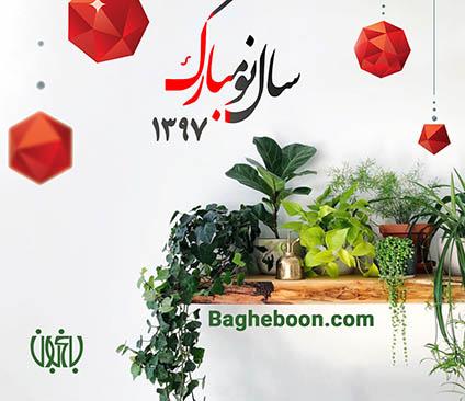 گل و گیاه خانگی باغبون گل و گیاه خانگی گل و گیاه خانگی insta