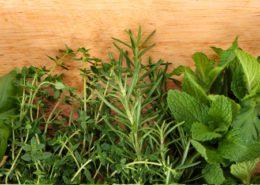 آموزش کاشت سبزی خوردن در گلدان                     2 260x185 گل و گیاه خانگی گل و گیاه خانگی  D8 B3 D8 A8 D8 B2 DB 8C  D8 AE D9 88 D8 B1 D8 AF D9 86 2 260x185