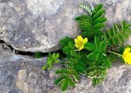 آموزش کاشت سبزی خوردن در گلدان emotional cracks 260x185 گل و گیاه خانگی گل و گیاه خانگی emotional cracks 260x185