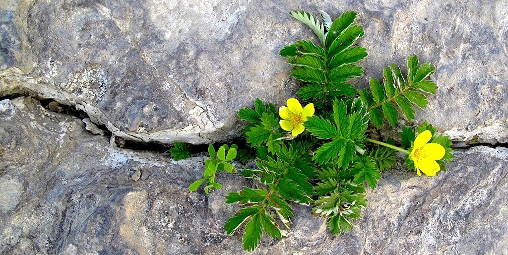 تأثير گل و گياه در سلامت روحی افراد emotional cracks  وبلاگ emotional cracks