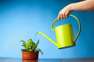 اصول صحیح آبیاری گیاهان water plant 300x200