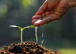 آموزش کاشت سبزی خوردن در گلدان watering hand 800 260x185 گل و گیاه خانگی گل و گیاه خانگی watering hand 800 260x185