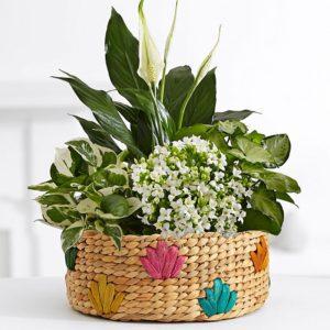 راه های تامین رطوبت مورد نیاز گیاهان آپارتمانی PP 16 GAR500 PC0217 W1 SQ 300x300