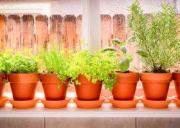 تأثير گل و گياه در سلامت روحی افراد Potted Herbs Header 260x185 گل و گیاه خانگی گل و گیاه خانگی Potted Herbs Header 260x185