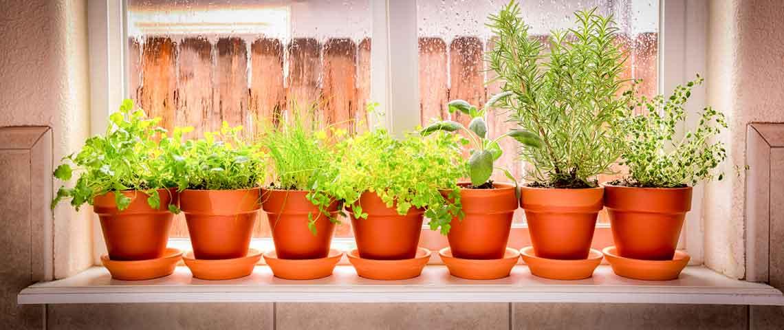 آنچه باید در مورد کود گیاهان آپارتمانی بدانید Potted Herbs Header  وبلاگ Potted Herbs Header