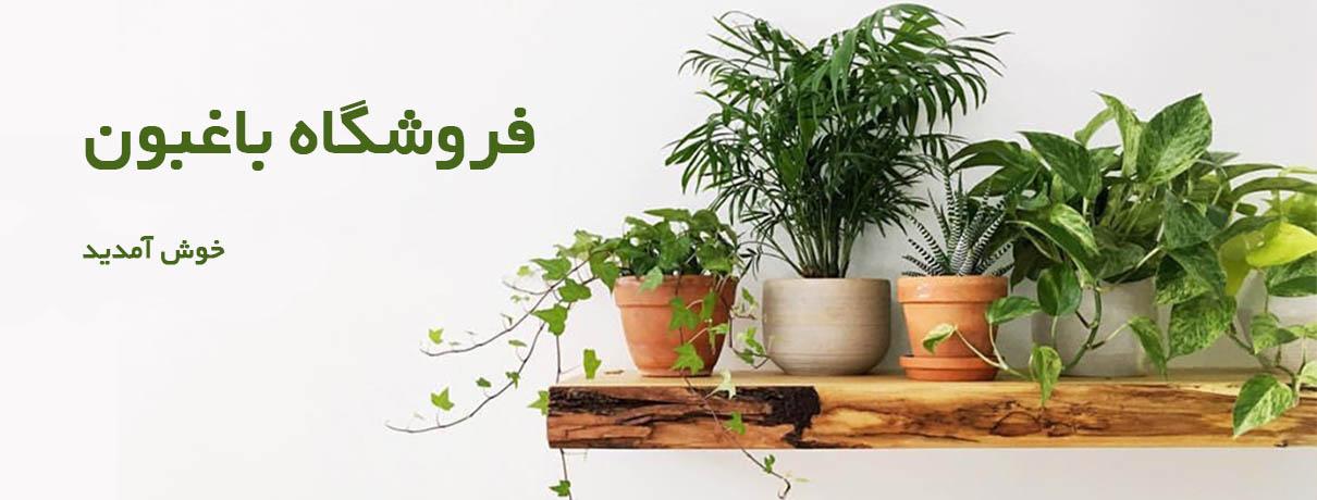 فروشگاه گیاهان آپارتمانی باغبون  فروشگاه bagheboon shop slider 2