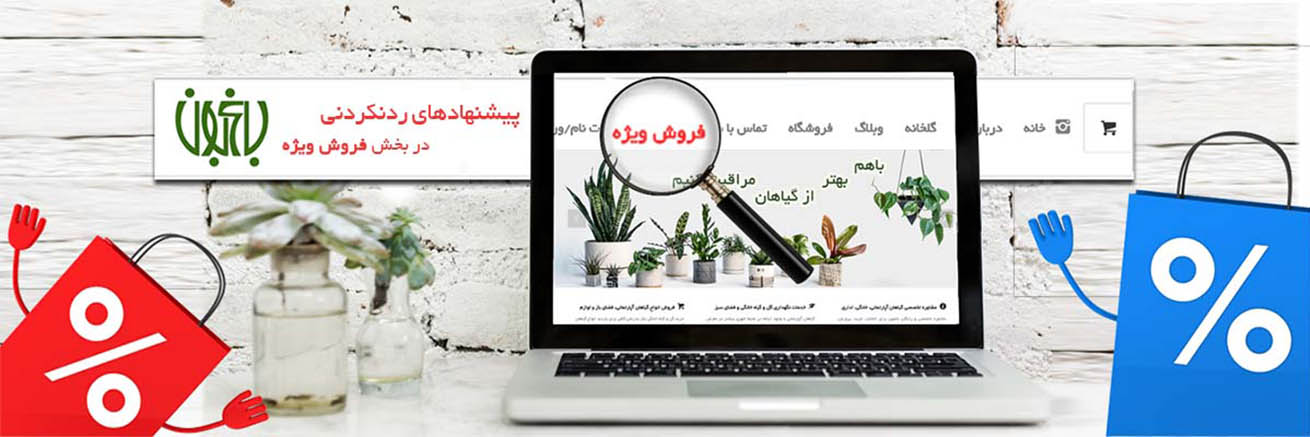 فروش ویژه گل و گیاه باعبون گل و گیاه خانگی گل و گیاه خانگی bagheboon special offers slide 2