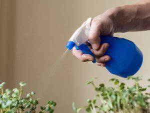راه های تامین رطوبت مورد نیاز گیاهان آپارتمانی misting indoor plants 1024x767 300x225