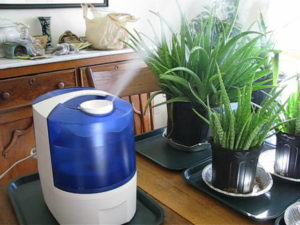 راه های تامین رطوبت مورد نیاز گیاهان آپارتمانی plant humidity 300x225