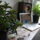 نگهداری از گیاهان آپارتمانی در تابستان 1106 maine 07 80x80
