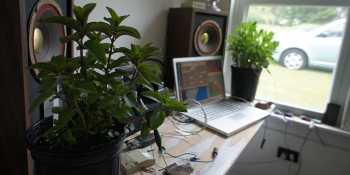 گیاهان آپارتمانی اکسیژن ساز گیاهان آپارتمانی اکسیژن ساز در شب 1106 maine 07  وبلاگ 1106 maine 07