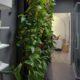 گیاهان آپارتمانی تصفیه کننده هوا living wall bathroom 80x80
