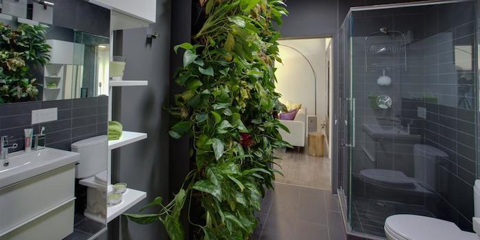 گیاهان مناسب نگهداری در حمام و سرویس بهداشتی living wall bathroom  وبلاگ living wall bathroom