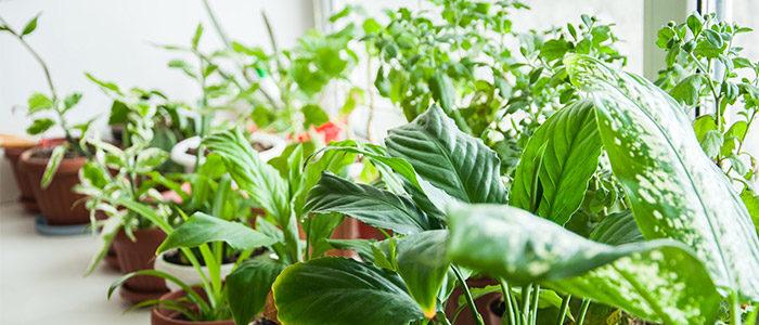 نگهداری از گیاهان آپارتمانی در تابستان pthomeandgarden 5 Tips for Taking Care of Indoor Houseplants 700x300  وبلاگ pthomeandgarden 5 Tips for Taking Care of Indoor Houseplants 700x300