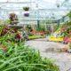 گیاهان مناسب نگهداری در حمام و سرویس بهداشتی tro cont anwendung luftbefeuchtung in gewaechshaeusern 47 80x80