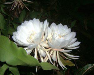 معرفی گرانترین گل ها 1 300x240