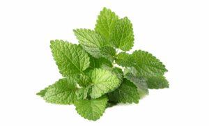 گیاهان دارویی که میتوان در منزل پرورش داد                      300x181